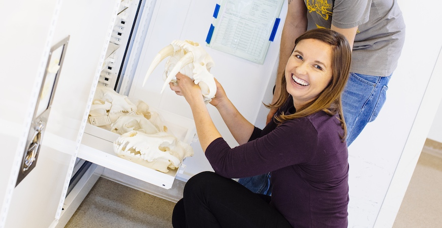 A kneeling woman holds the skull of a saber-toothed cat in front of a chest of drawers containing fossils.