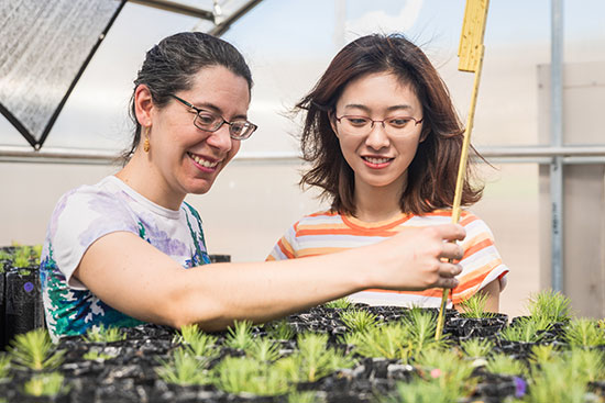 Researchers work with tree seedlings in a greenhouse.