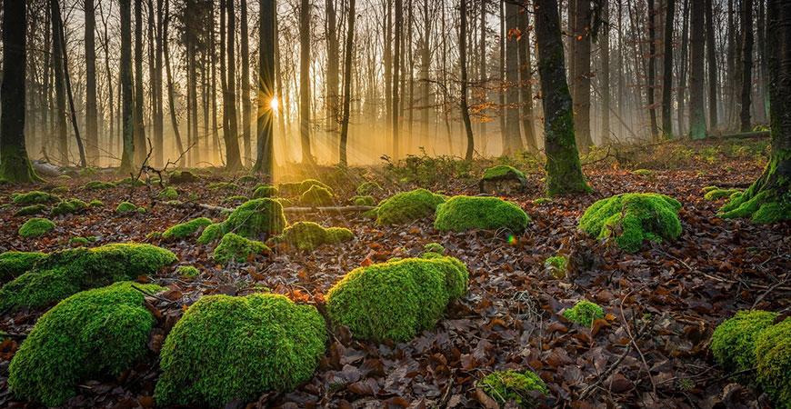 A verdant forest floor